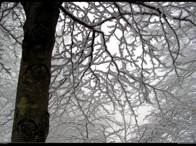 arbres-et-branches-sous-la-neige