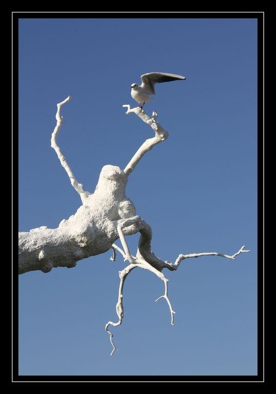 pigeon branche_ [1280x768]