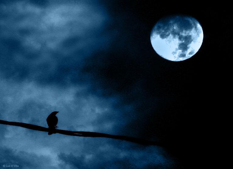 pleine-lune-corbeau