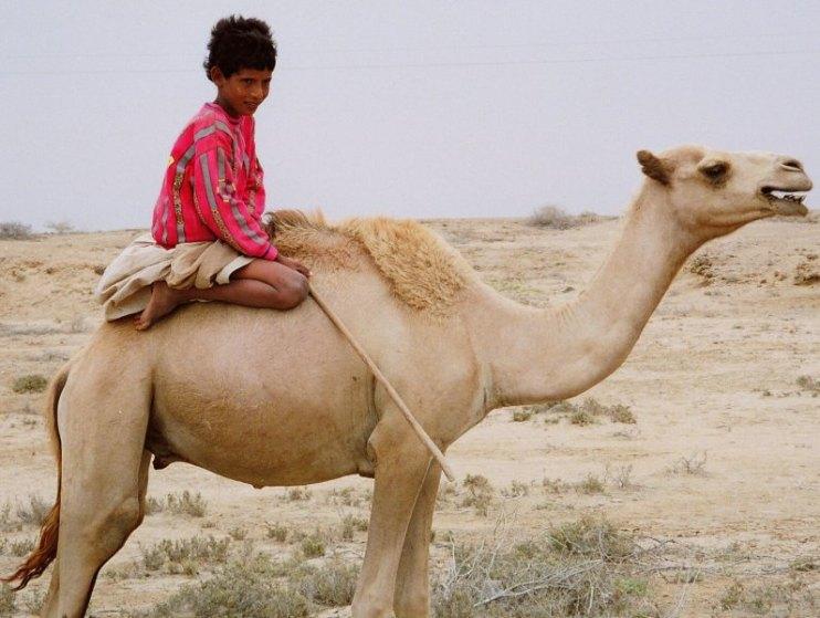 enfant chameau
