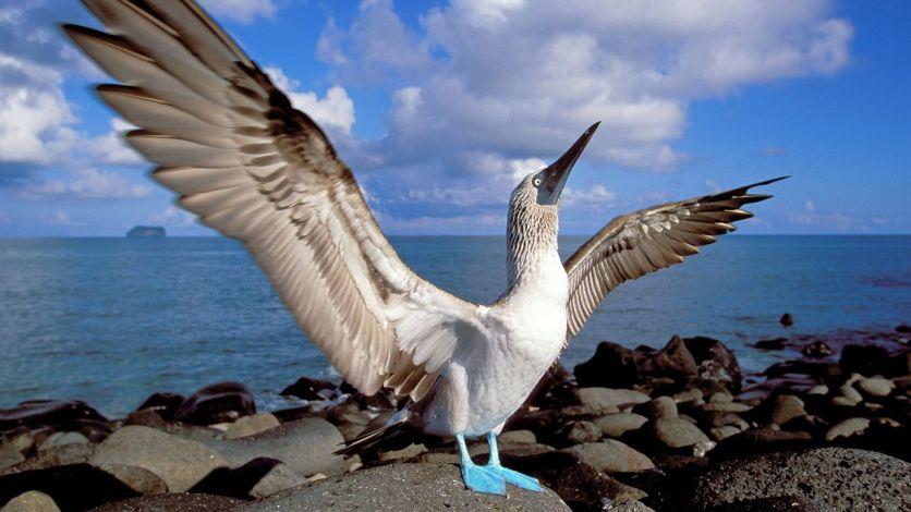 oiseau des îles [1280x768]