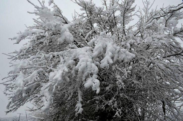 ormeau neige [1280x768]