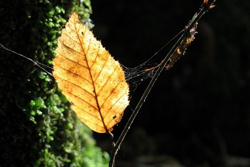 araignée l [1280x768]