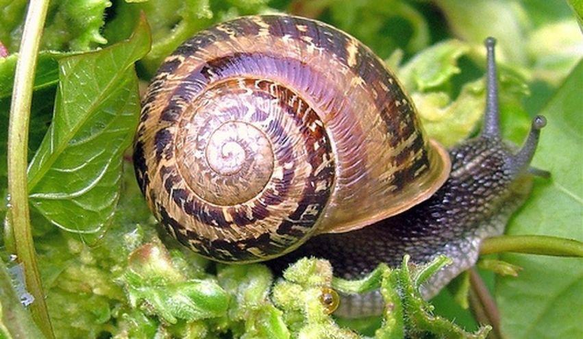 escargot [1280x768]