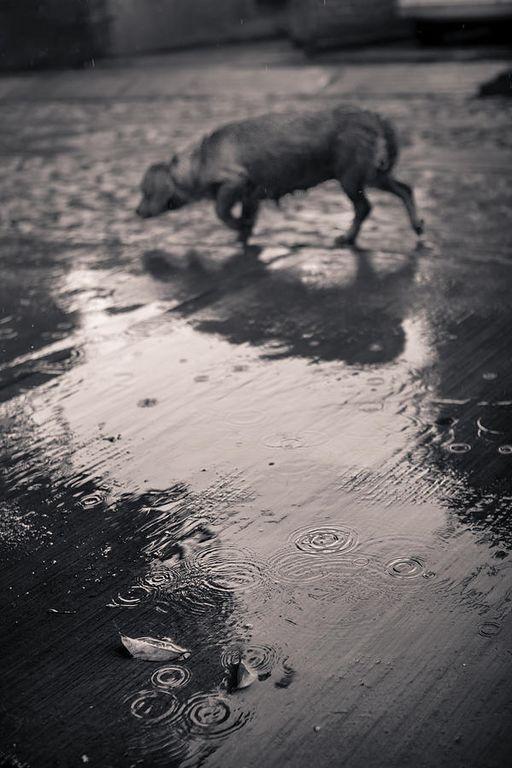 chien sous la pluie [1280x768]