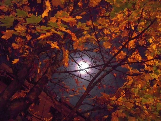lune [1280x768]