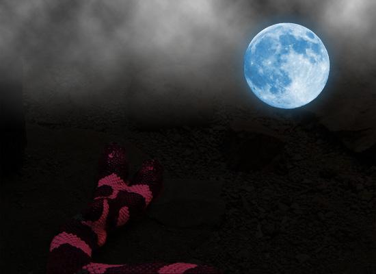 lune et serpent