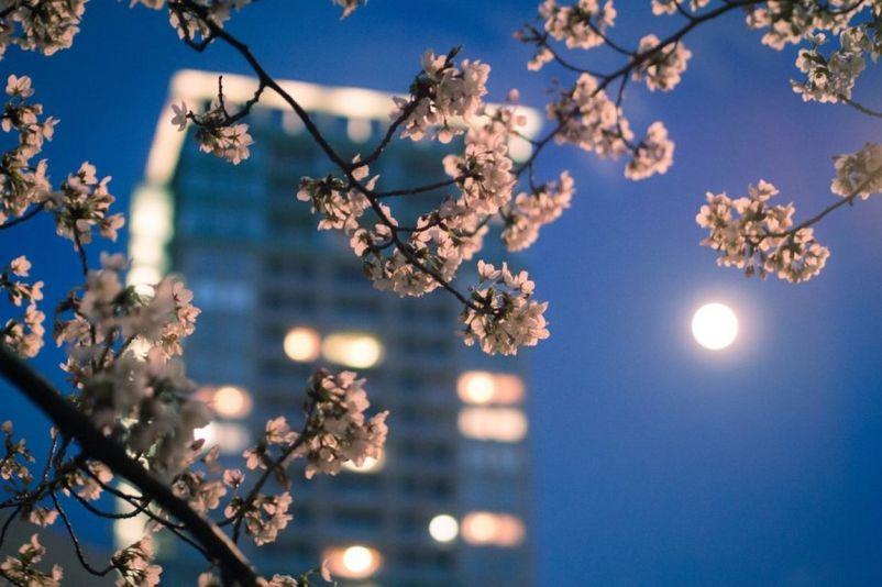 lune printemps p [1280x768]