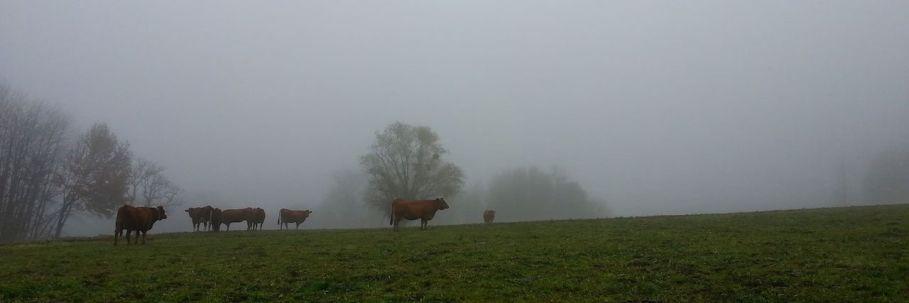 Vaches-dans-le-brouillard [1280x768]