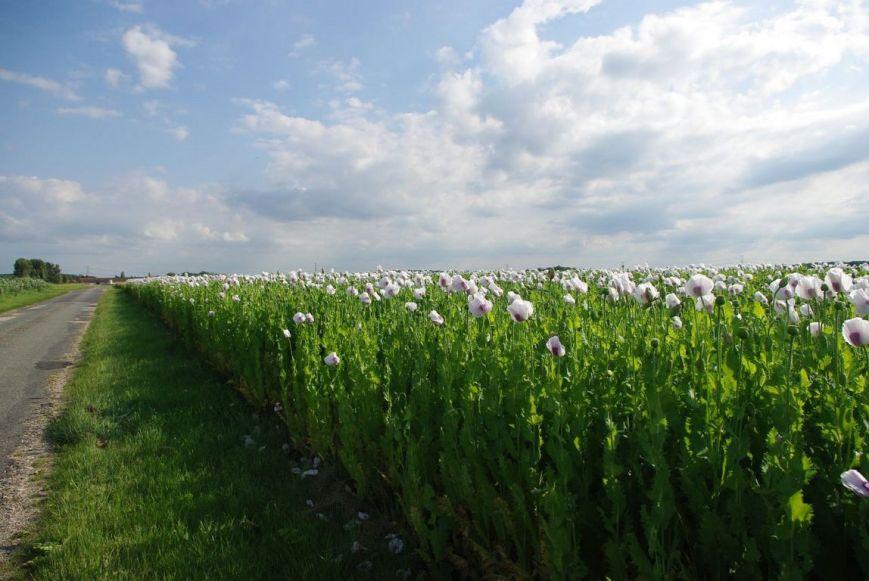 champs de fleurs 3650705423_2399af863a_o [1280x768]