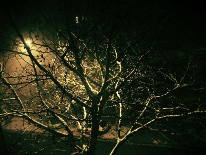 Arbre_de_nuit_  [1280x768]