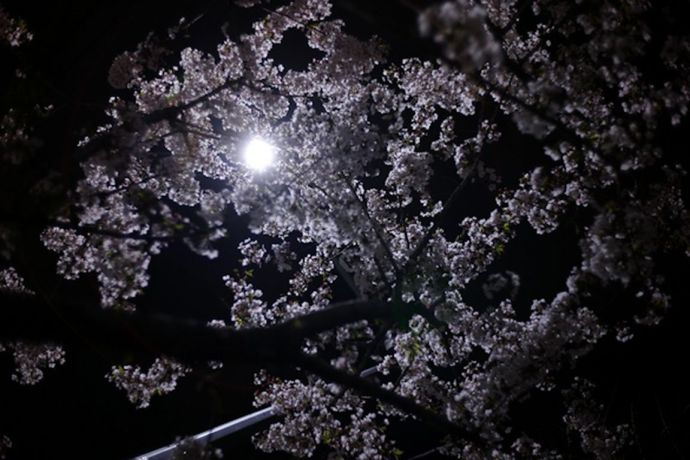 cerisier-b [1280x768]