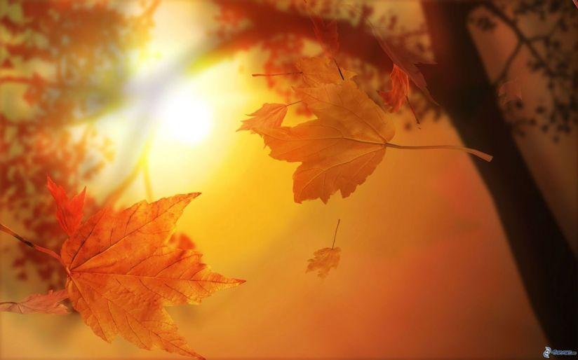 feuilles-jaunes,-arbre,-soleil-161855(1) [1280x768]