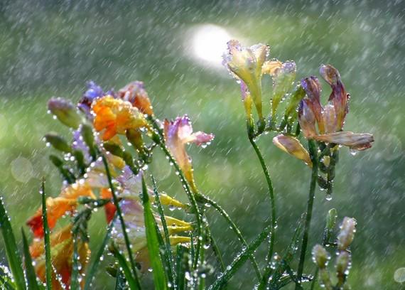 fleurs pluie 0x0
