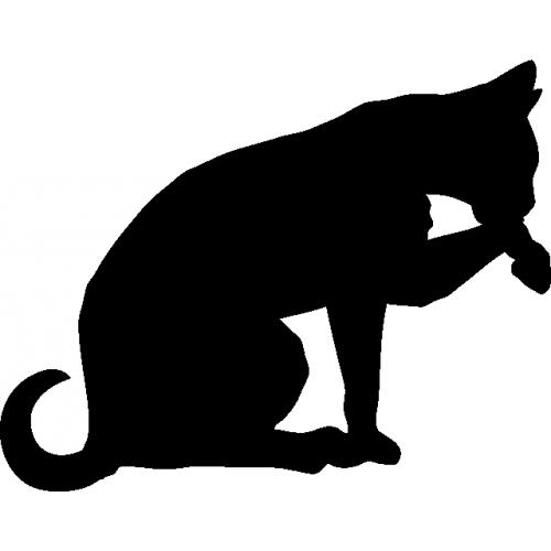 Chat qui miaule tout le temps pour manger