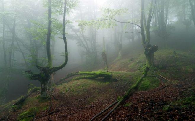 forêt 5 [800x600]