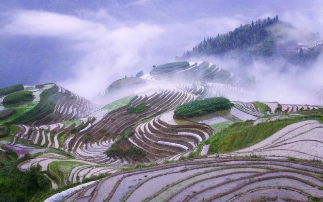 ??????,?? (Rice terraces in early morning mist, Guangxi Province