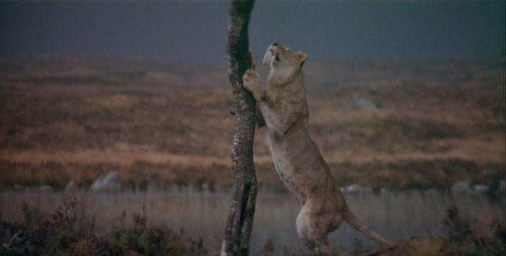 La Guerre du Feu tigre-sabre