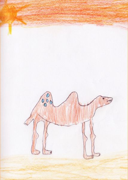 chameau001 [800x600]