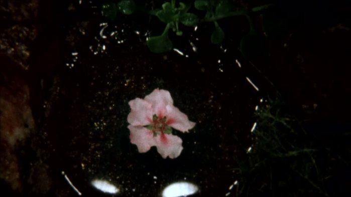 fleur-de-pecher