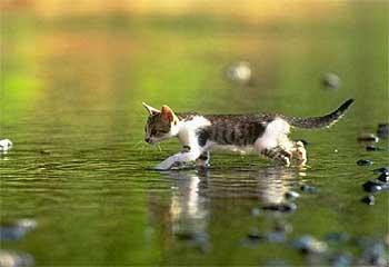chat_eau2