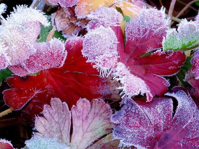 feuilles gelées [800x600]