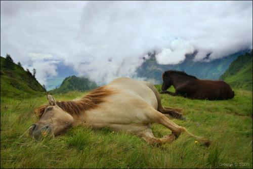 chevaux endormis 0