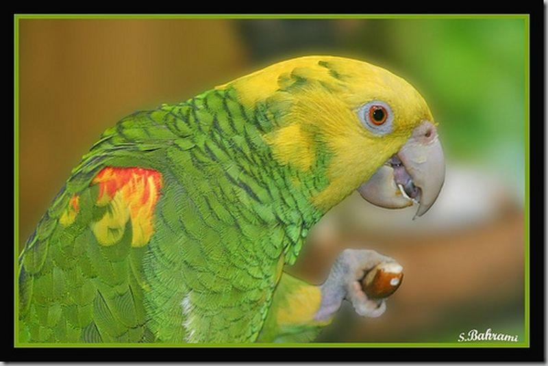 perroquet [800x600]