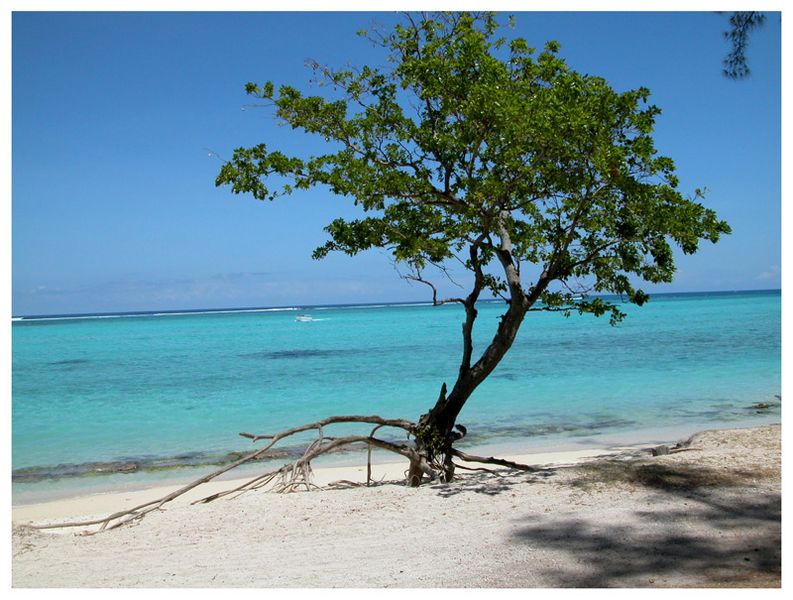arbre mer [800x600]