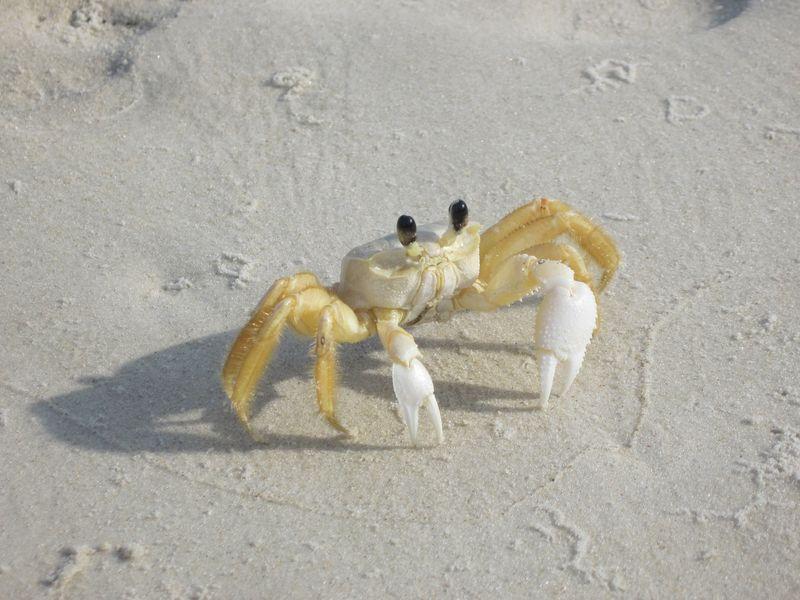 crabe 9 [800x600]