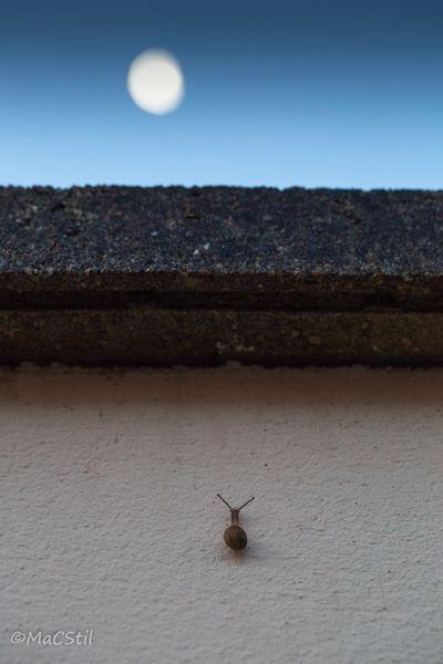escargot-et-lune-1-sur-1 [800x600]