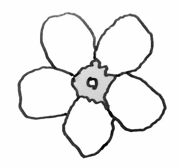 myosotis-fleur