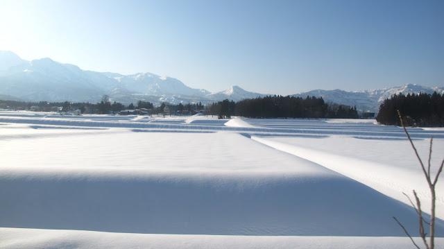 rizière sous la neige
