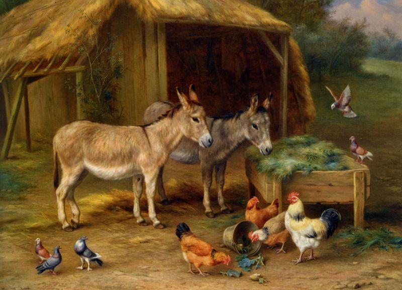 Edgar Hunt poules ferme  [800x600]