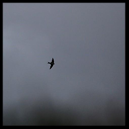 oiseau .2