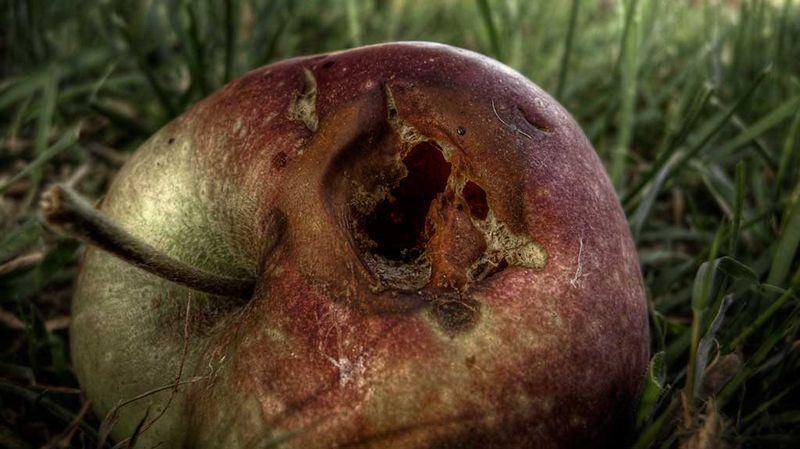 pomme-pourrie [800x600]