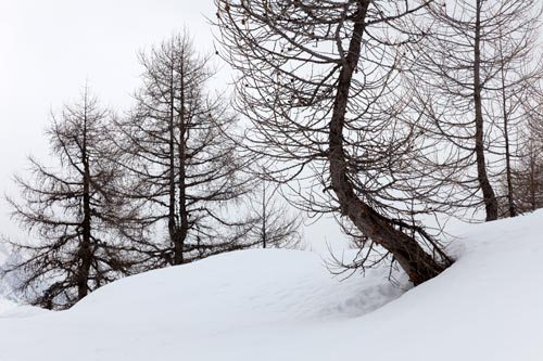 neige mélèzes 5