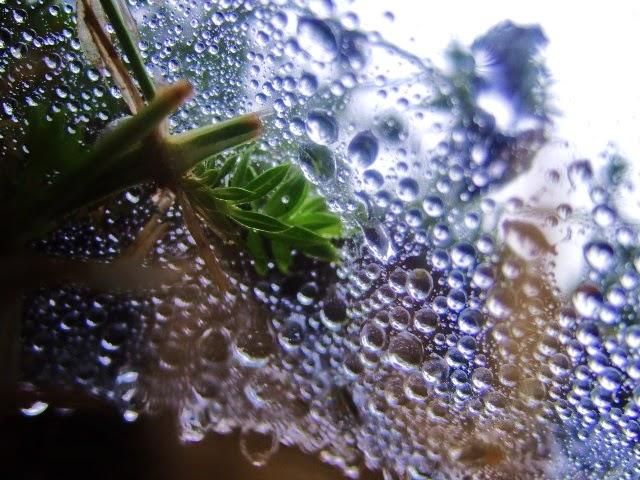 pluie toile d'araignée