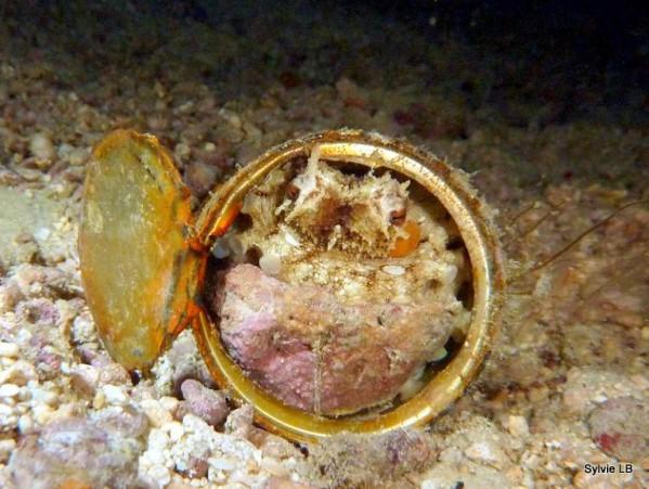 Poulpe-en-boite-conserve-Octopus-01