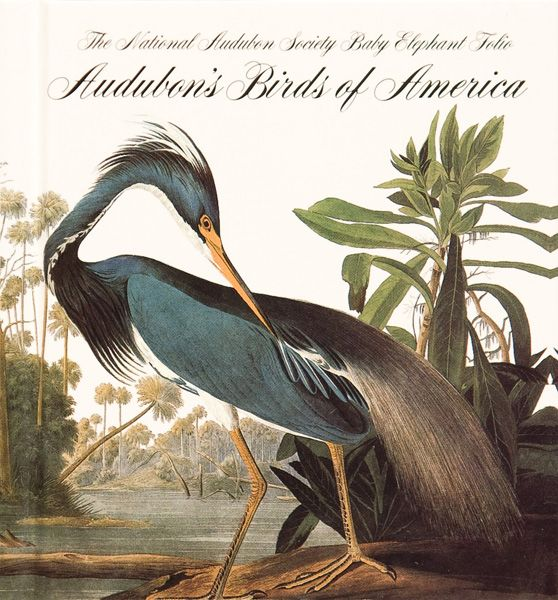 Audubon_Birds_of_America [800x600]