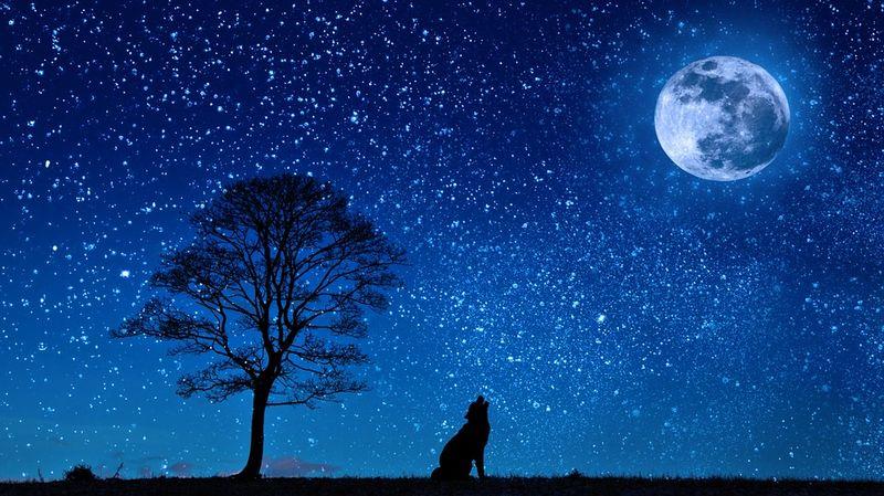 chien lune 0 [800x600]