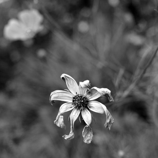 edelweiss fané pf [800x600]