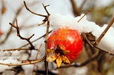 grenade sous la neige