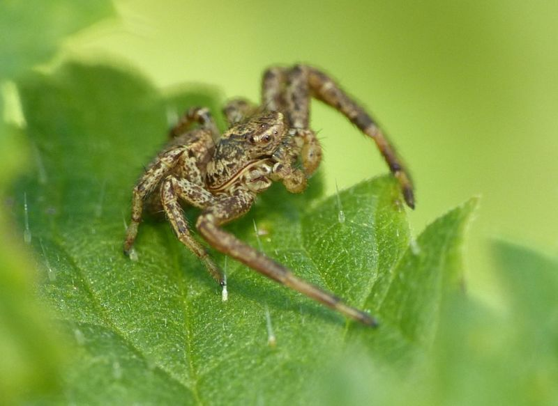 araignée ortie8 [800x600]