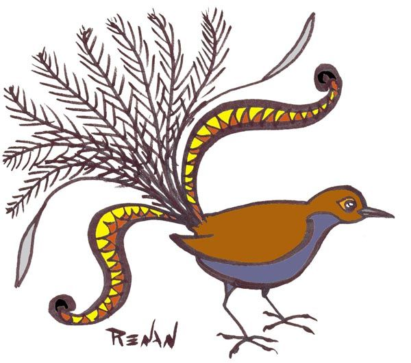oiseau lyre 865