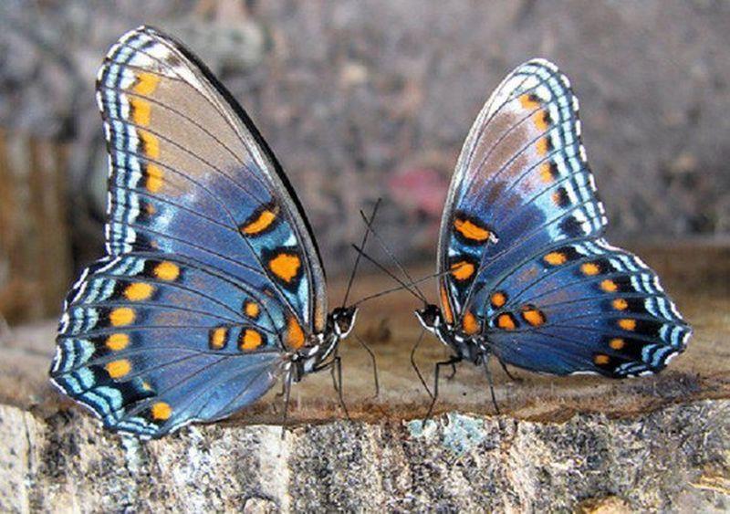 papillons 1 [800x600]