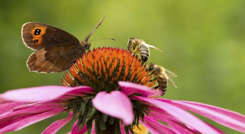 abeille papillon 560 [800x600]