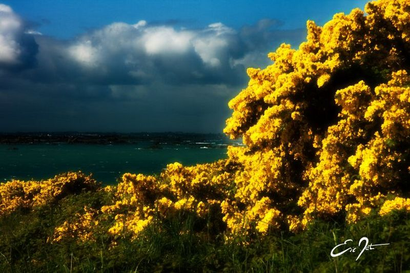 ile-fleurs-6d-800x600