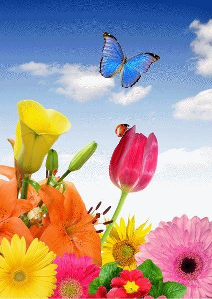papillon-g-800x600