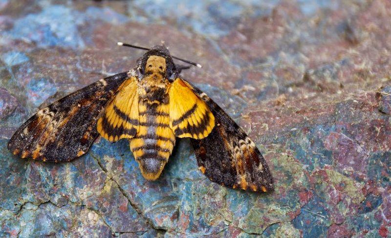 papillon-morta-800x600